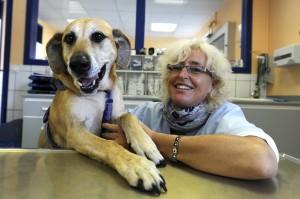 Stressfreie Besuche für Ihr Tier